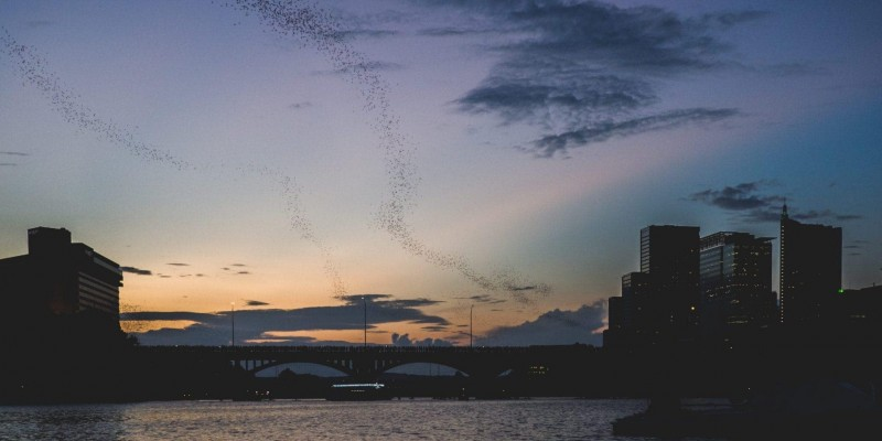 Where to see the bats in Austin