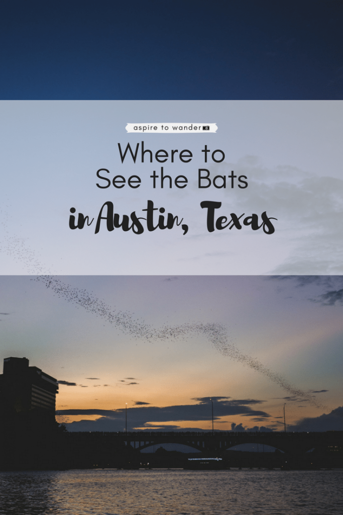 Where to See the Bats in Austin, Texas (1)