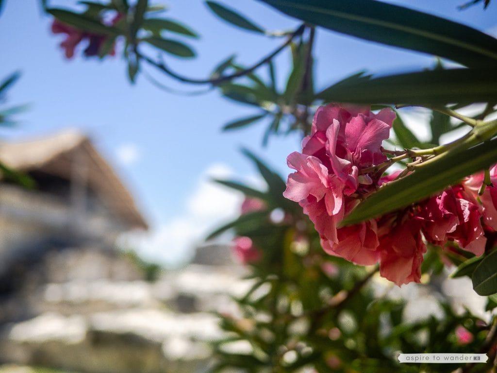 Zona Arqueologica El Rey Cancun