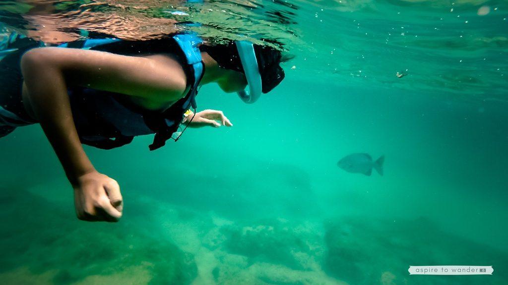 Riviera Maya snorkeling at Xel-Há