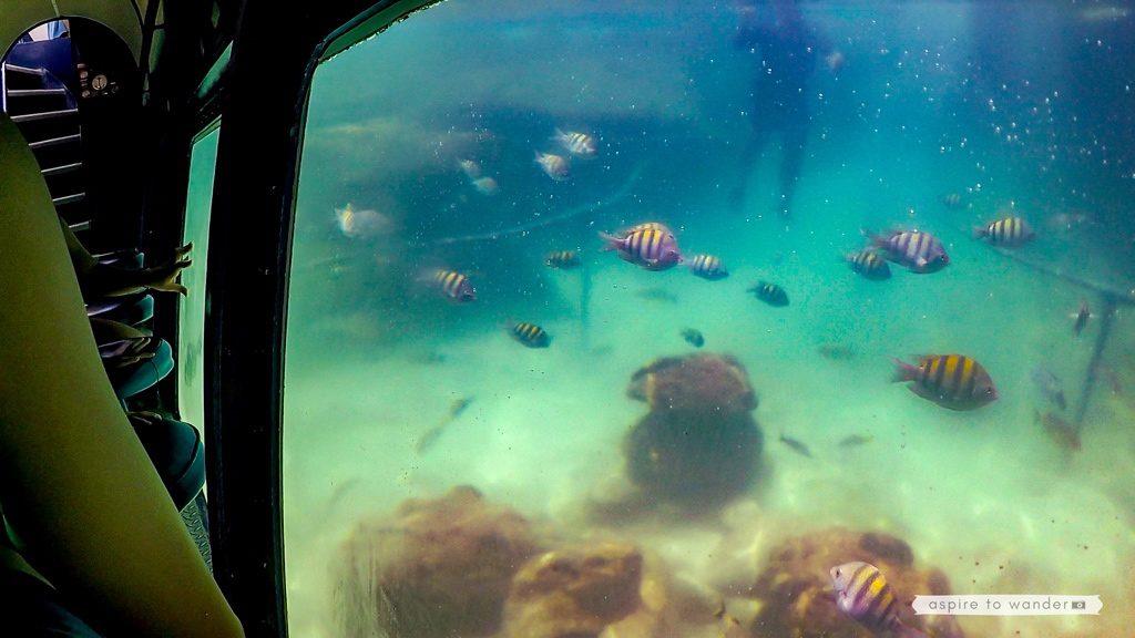 Xel-Há Natural Aquarium