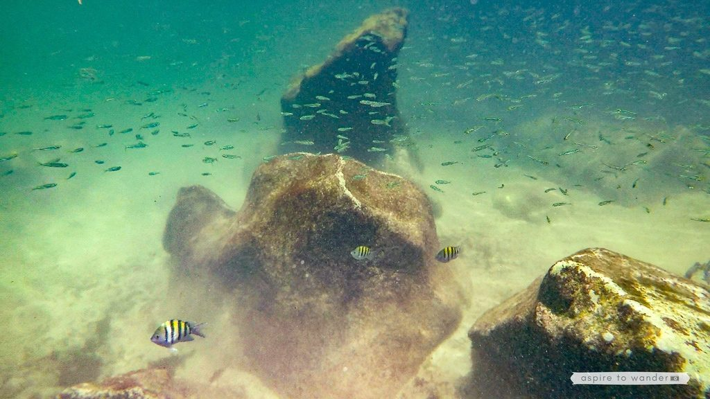 Snorkeling Xel-Ha - natural aquarium in the Riviera Maya, Mexico