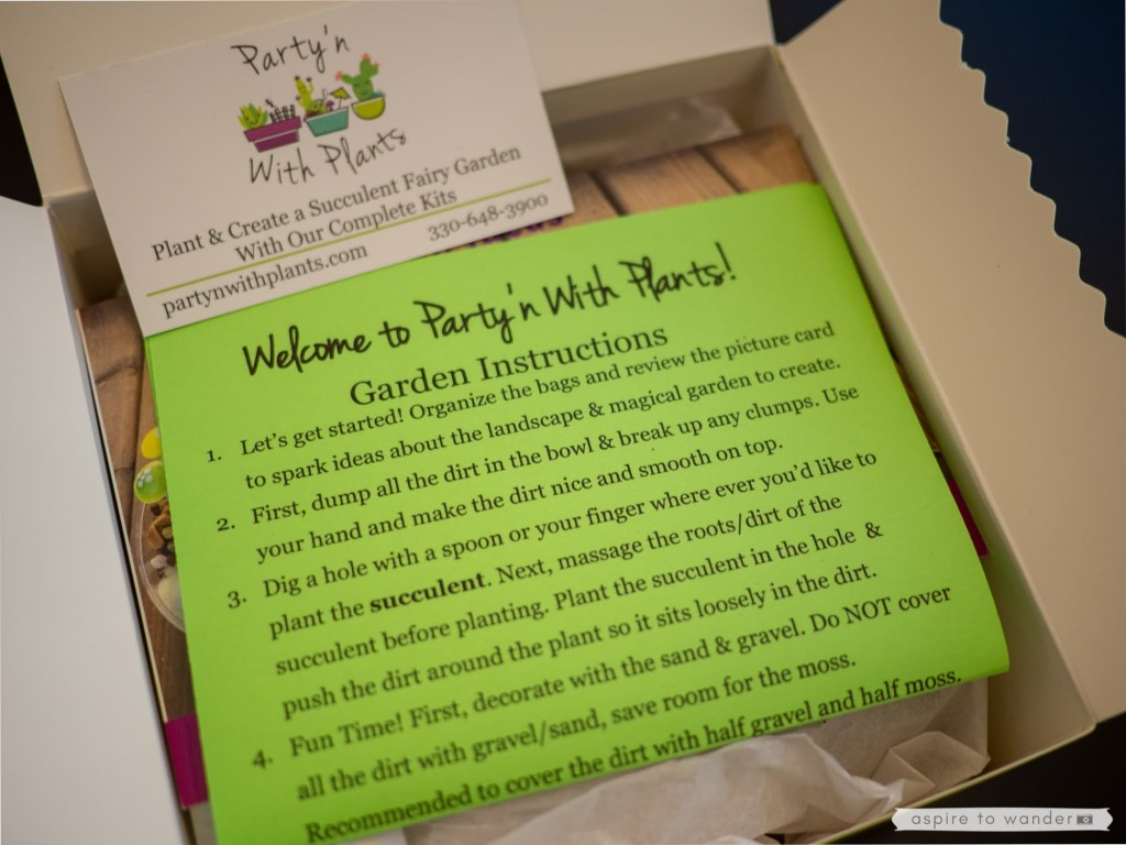 Party'N with Plants Dinosaur Garden Kit