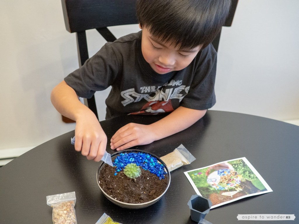 succulent gardening with kids