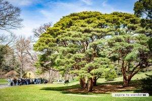 Visiting the New York Botanical Garden with kids - Bronx, New York City