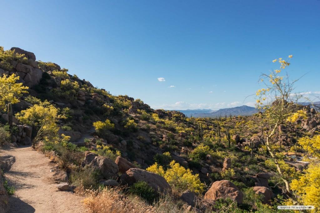 Pinnacle Peak Park   Scottsdale   Phoenix   Arizona   Sonoran Desert