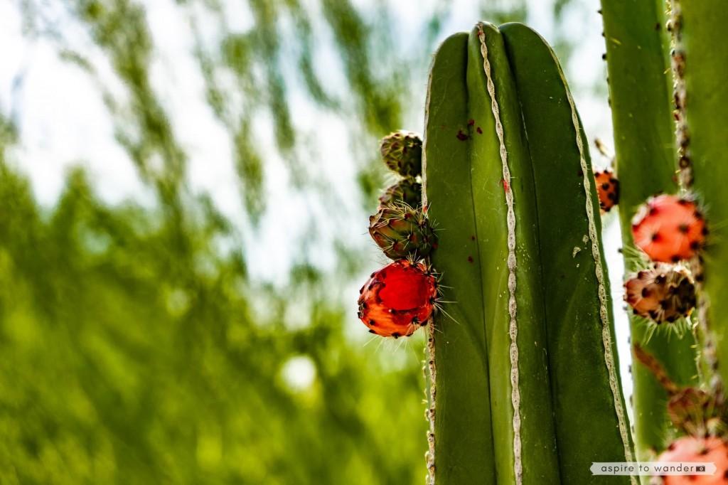 Desert Botanical Garden | Phoenix, Arizona
